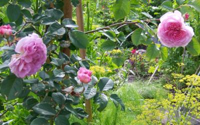 Tuinieren is vooruitzien