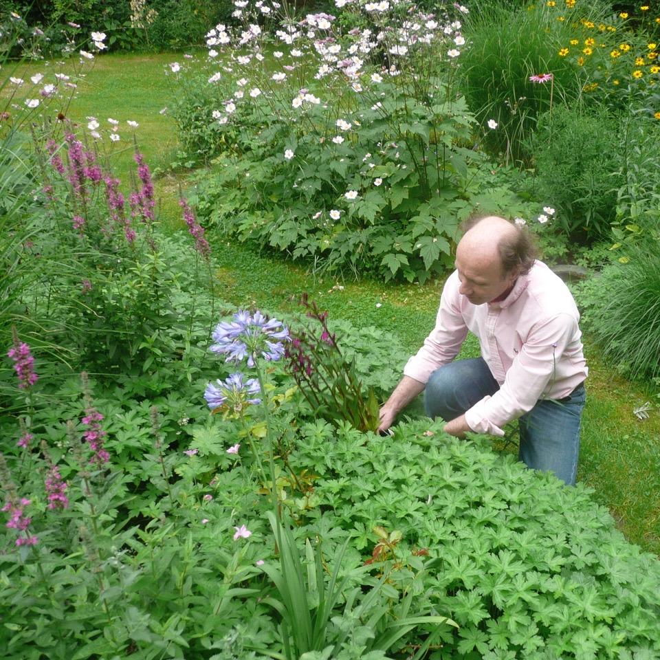 aanvullende bloeier planten