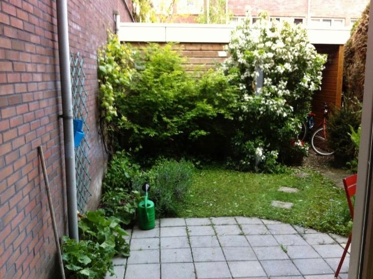 grote struiken in kleinere tuin